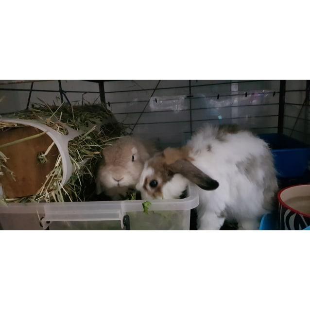 Photo of Maple & Milton