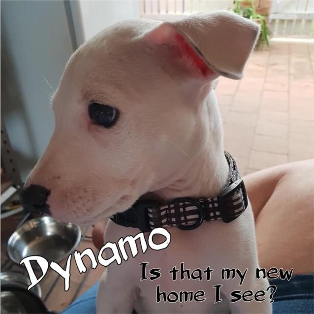 Photo of Dynamo