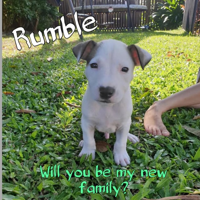 Photo of Rumble