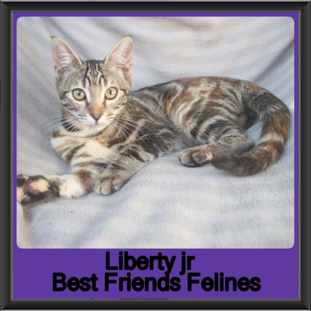 Photo of Liberty Junior