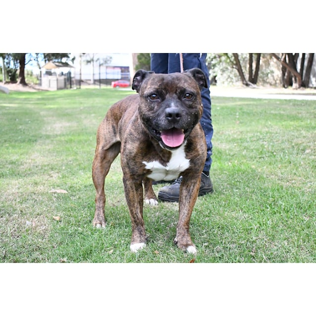 Photo of Champ 31638 Campbelltown Acf