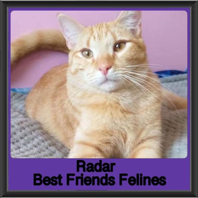 Photo of Radar