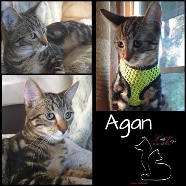 Photo of Agan