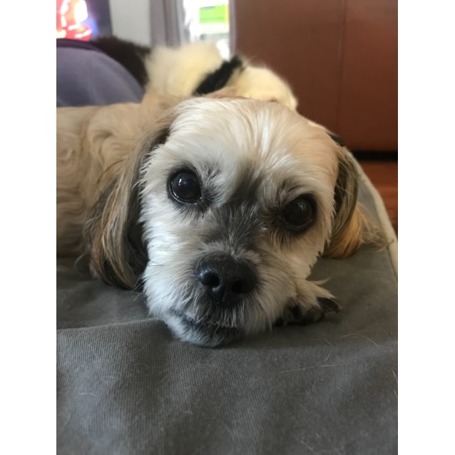 Photo of Biscuit