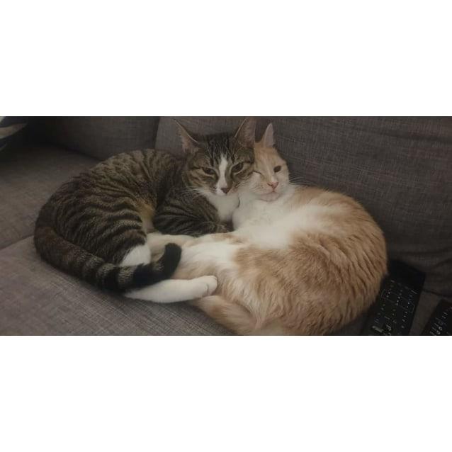 Photo of Jasper And Poppy