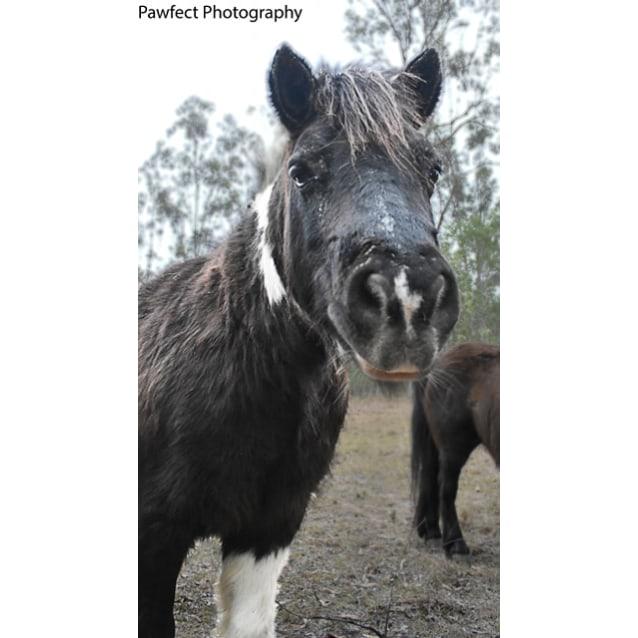 Photo of Apache