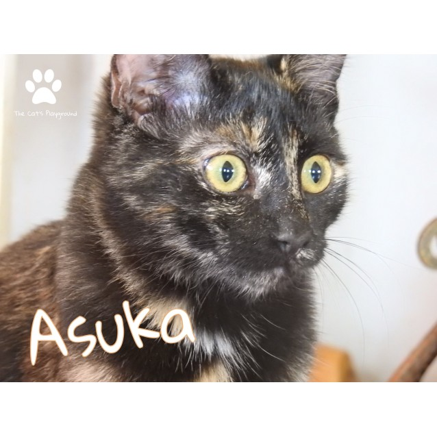 Photo of Asuka