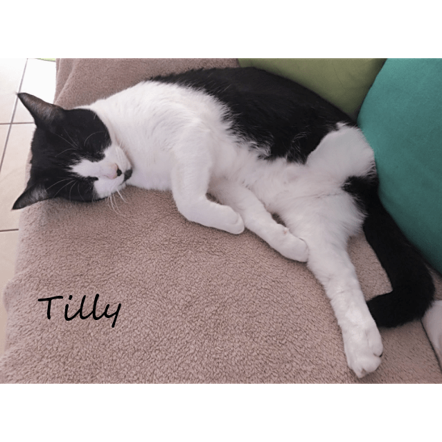 Photo of Tilly