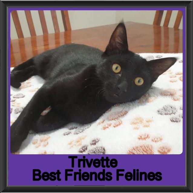Photo of Trivette