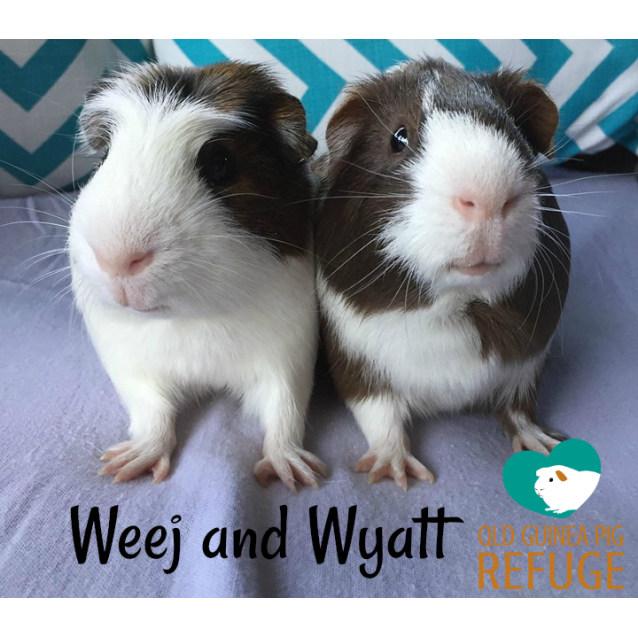 Photo of Weej And Wyatt