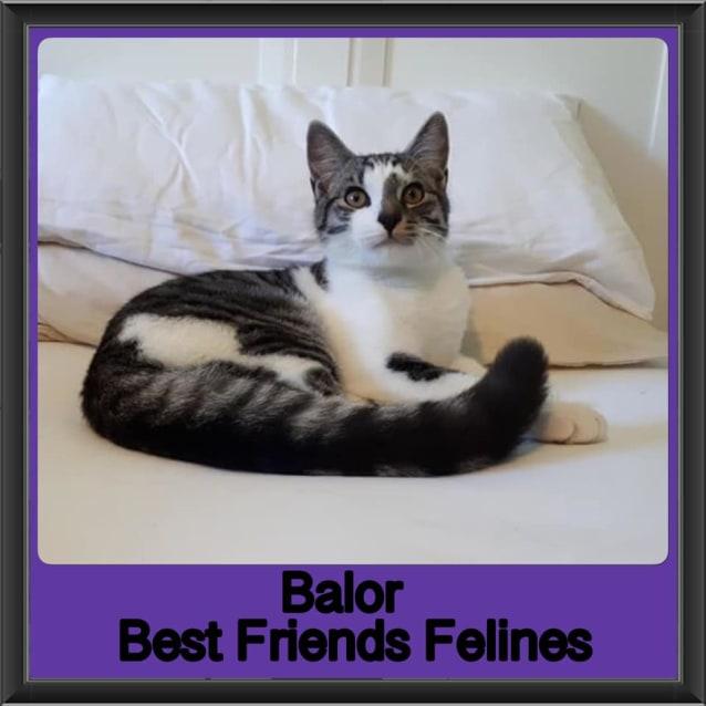 Photo of Balor
