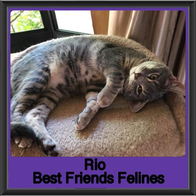 Photo of Rio