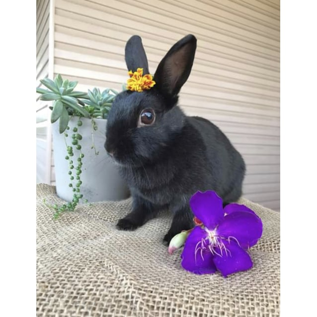 Photo of Maly 🐰