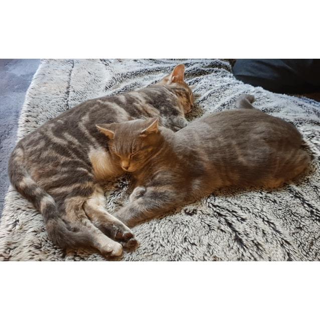 Photo of  Sebastian And Zoe