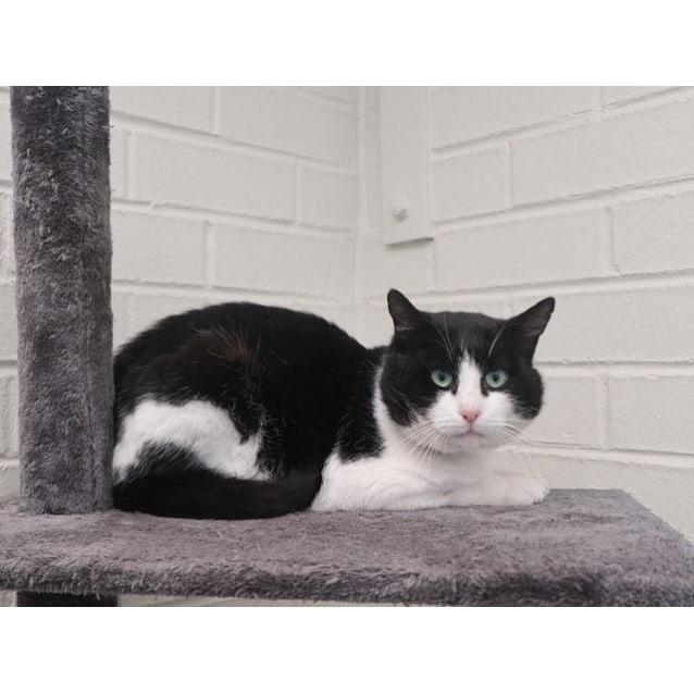 Photo of Fats Domino (2795)