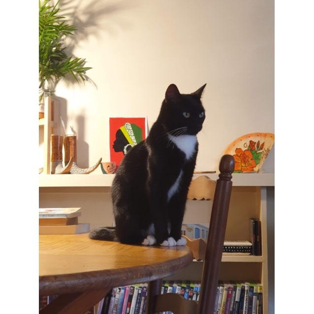 Photo of Newman    Located In Northcote