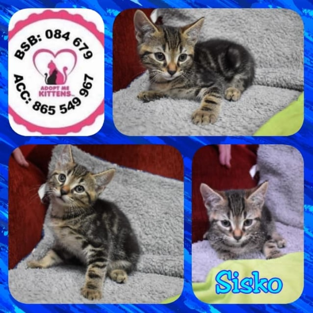 Photo of Sisko