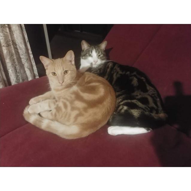 Photo of Buddy And Winston