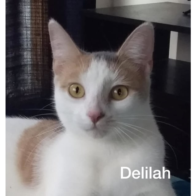 Photo of Delilah