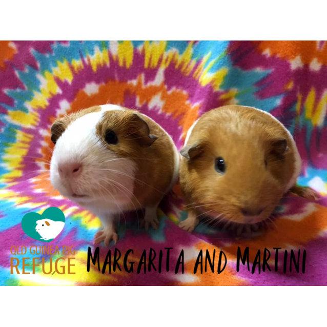 Photo of Margarita And Martini