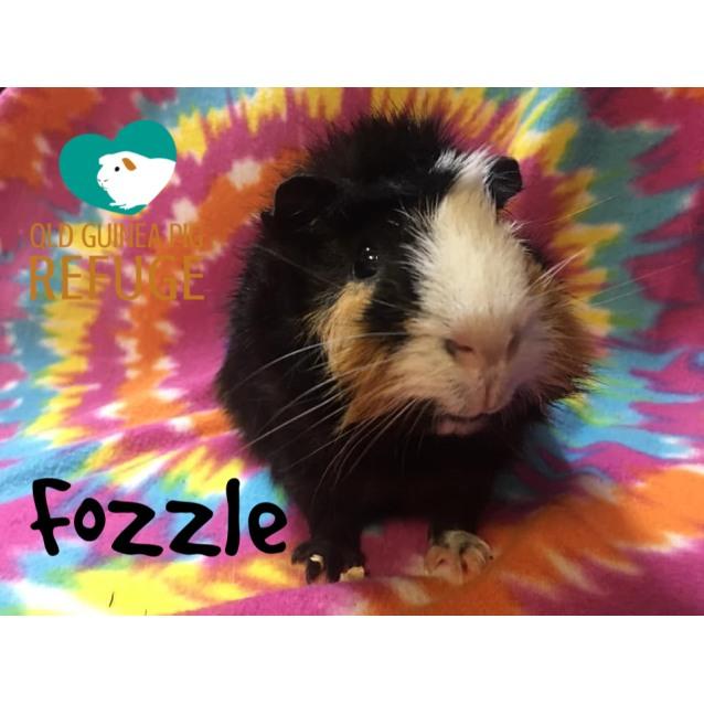 Photo of Fozzle