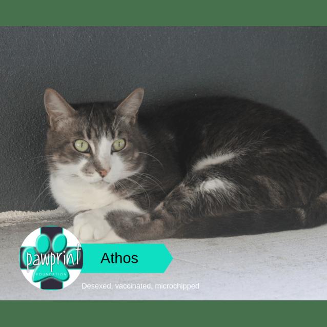 Photo of Athos