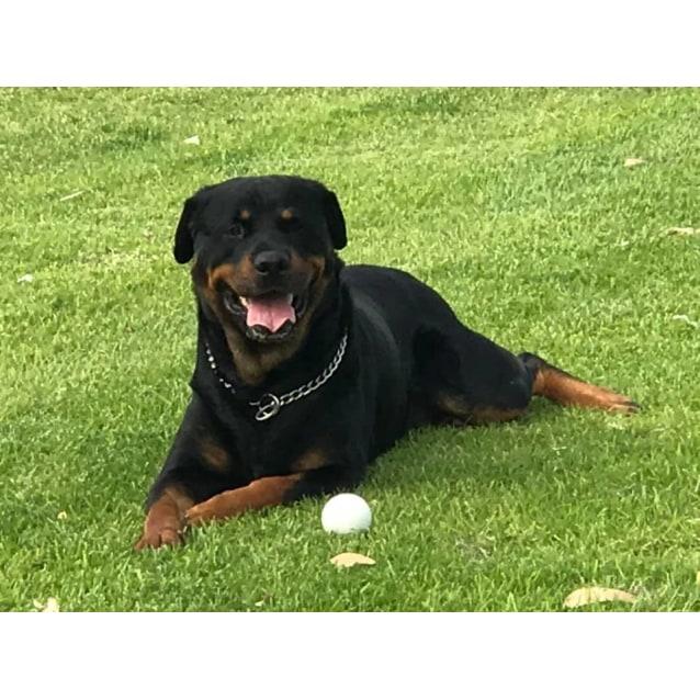 Photo of Max * No More Calls Please Adoption Pending *