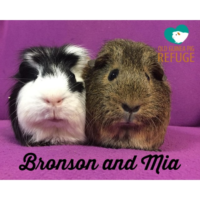 Photo of Bronson (Desexed Male) And Mia