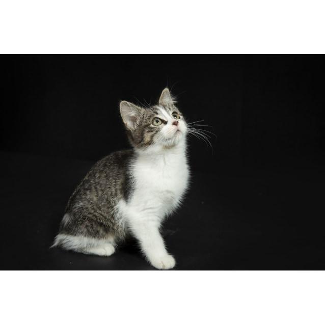 Photo of Blinker