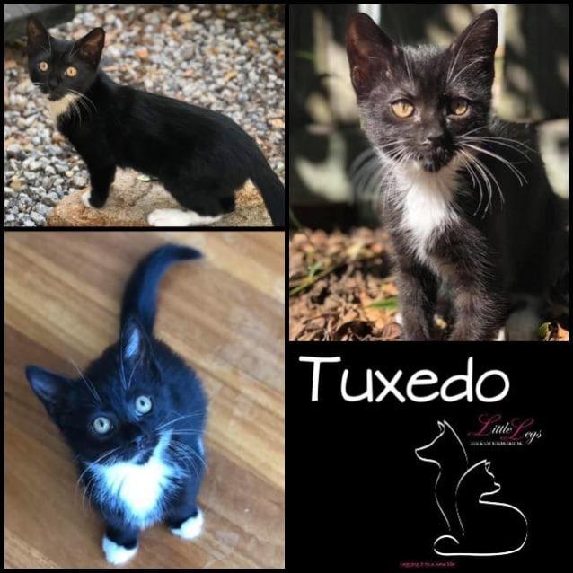 Photo of Tuxedo