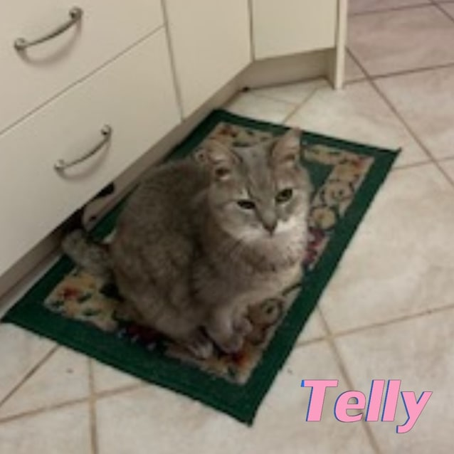 Photo of Telly
