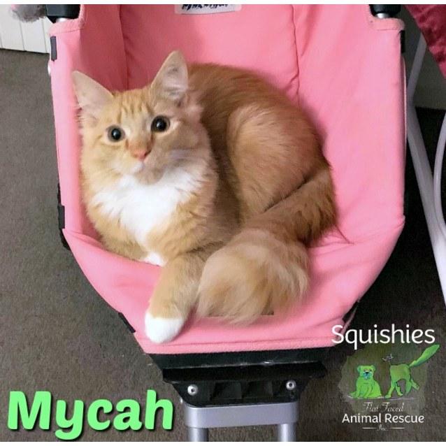 Photo of 🐈 Mycah 🐈
