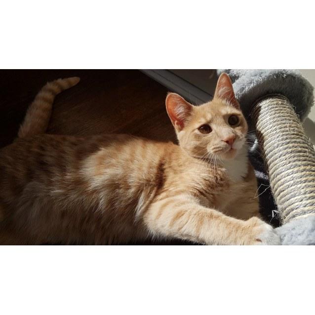 Photo of Loniel