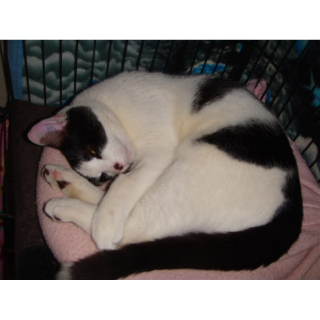 Photo of Bob Short For Bobcat