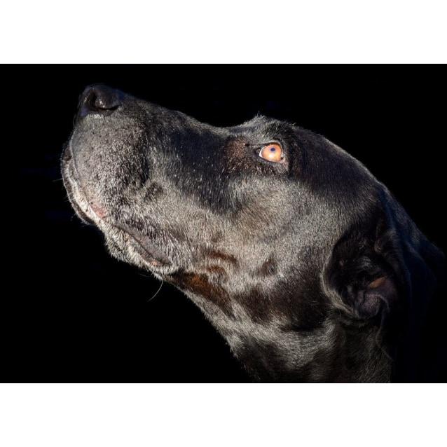 Photo of Beatrix
