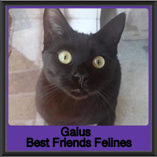 Photo of Gaius