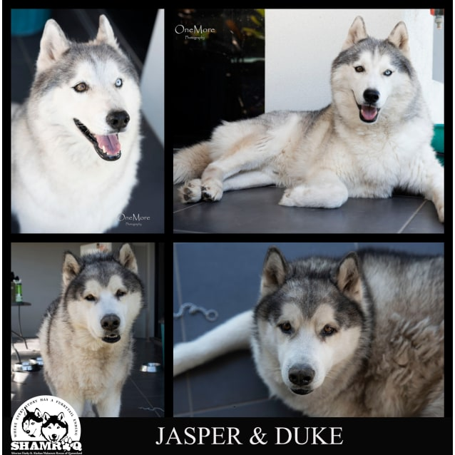 Photo of Duke & Jasper