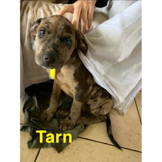 Photo of Tarn