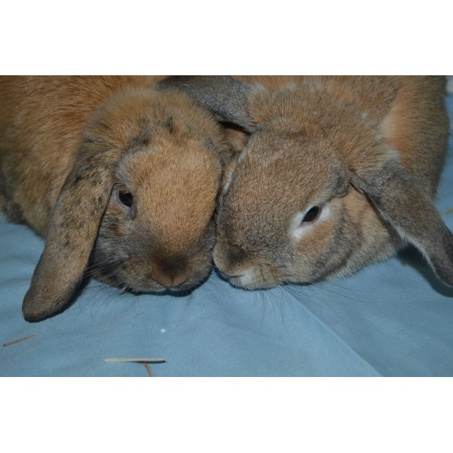 Photo of Peanut And Cookie