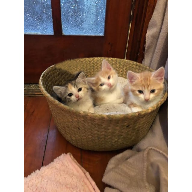 Photo of George, Ernie And Clementine
