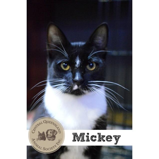 Photo of Mickey
