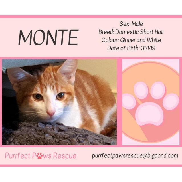 Photo of Monte