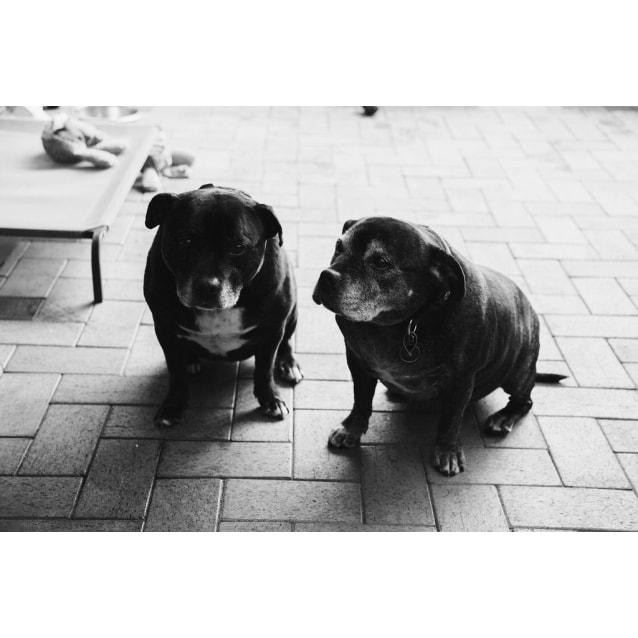 Photo of Scarlett And Jess