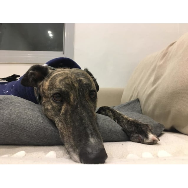 Photo of Keith (In Foster 22 June)