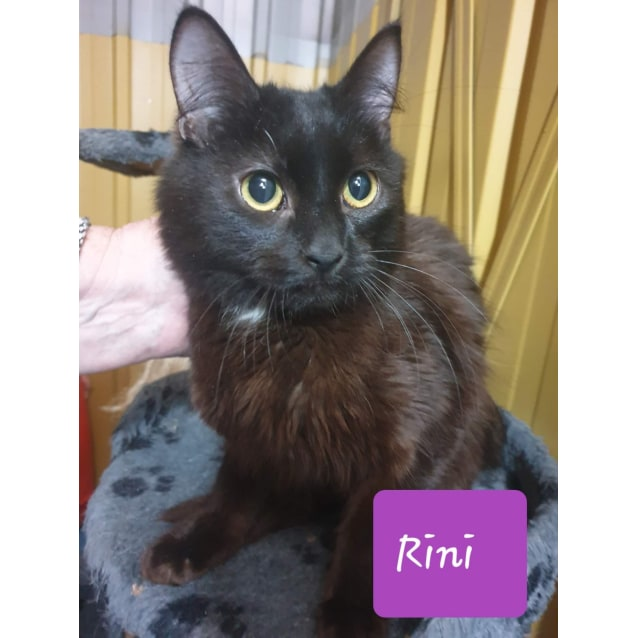 Photo of Rini