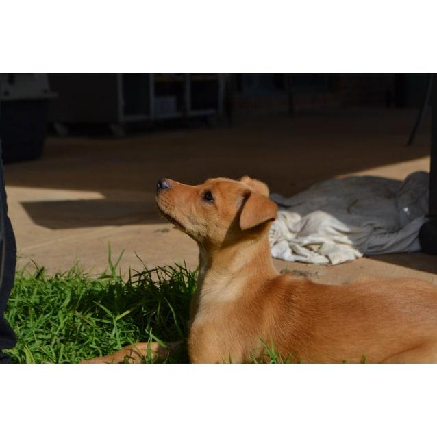Photo of Tawny