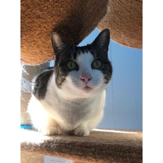 Photo of Kitty Boop