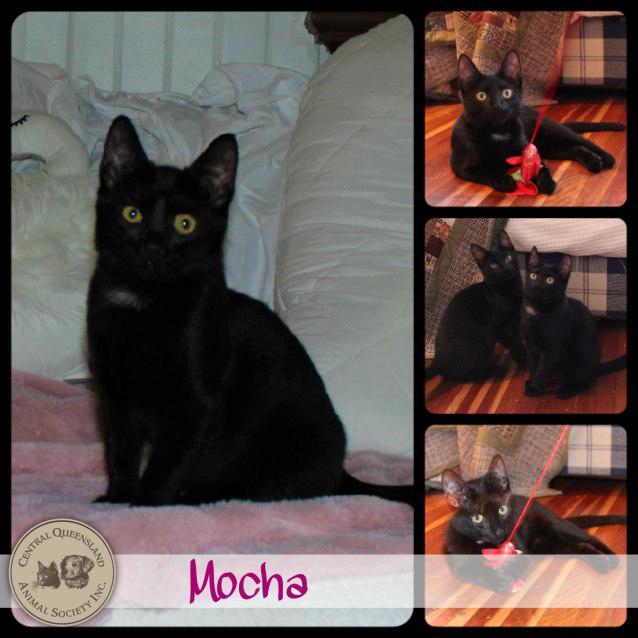 Photo of Mocha