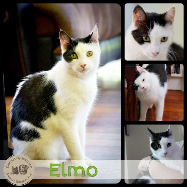 Photo of Elmo