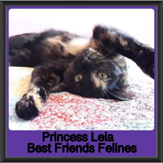 Photo of Princess Leia